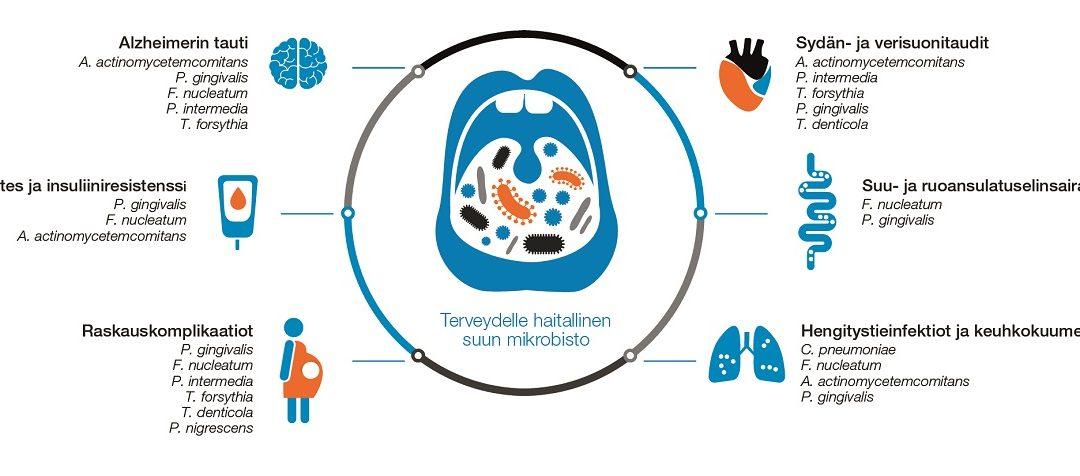 Meitä suojaavat bakteerit sekä suussa että suolistossa